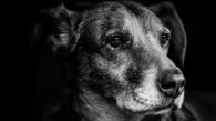 Dog - loyaltly